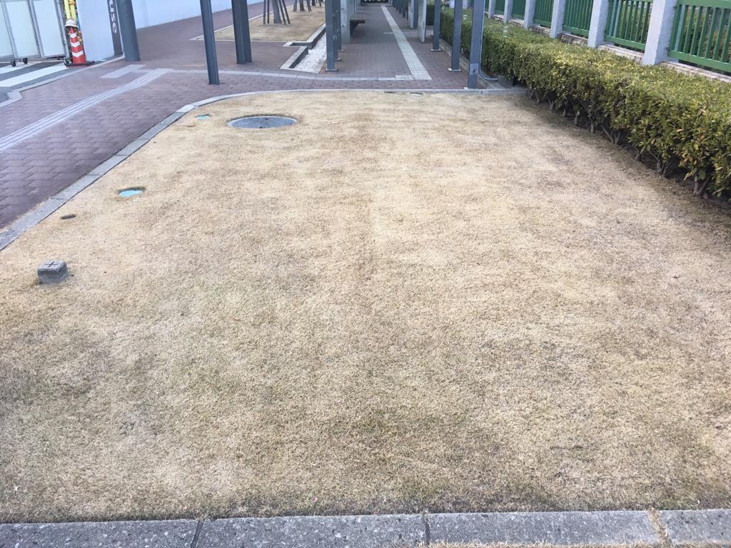 2 月 芝生